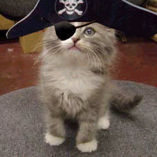 Picture of a Pirate Cat