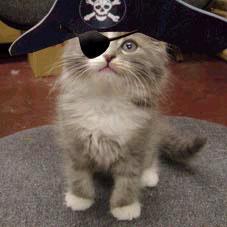 Picture of a Pirate Cat